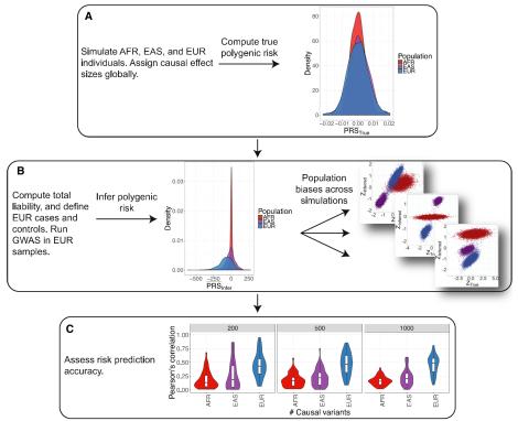 Genetic risk prediction